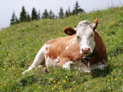 Chew on this: How we believe our meat is raised can influence how it tastes