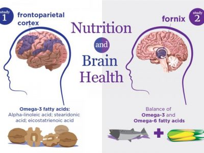 Studies link healthy brain aging to omega-3 and omega-6 fatty acids in the blood