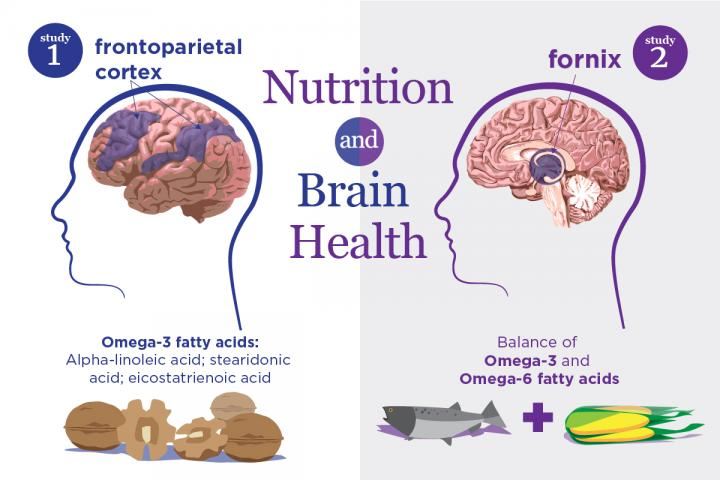 Nutrition and brain health